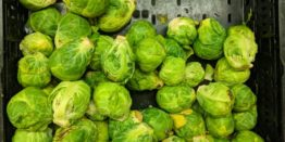 Are brussel sprouts good for weight loss? Weight loss vegetables.